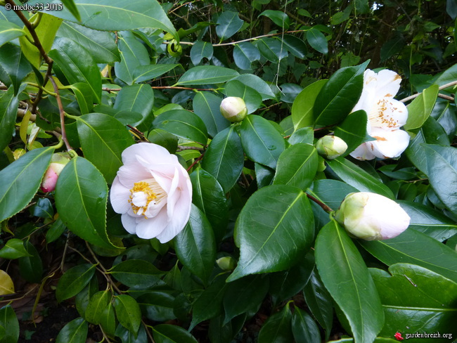 premiers sourires du jardin GBPIX_photo_657927