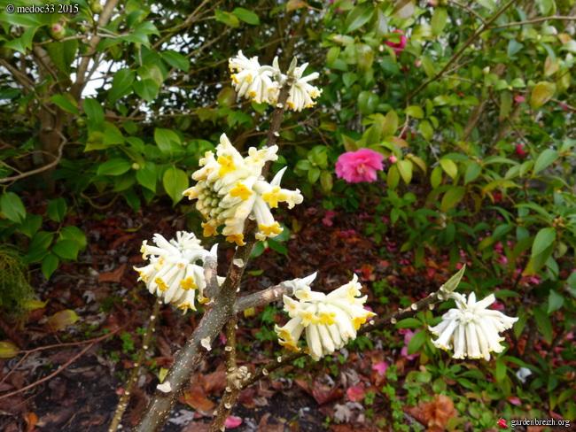 premiers sourires du jardin GBPIX_photo_657940
