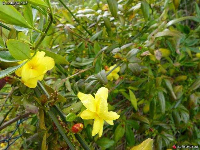 premiers sourires du jardin GBPIX_photo_657949