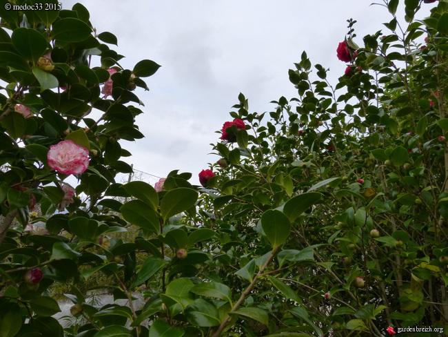 premiers sourires du jardin GBPIX_photo_657982