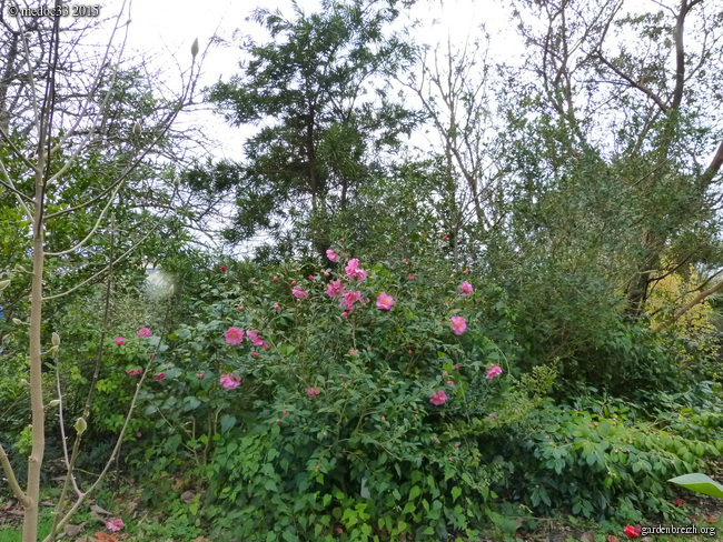 premiers sourires du jardin GBPIX_photo_657983