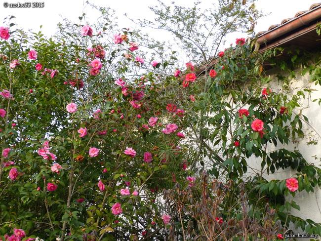 premiers sourires du jardin - Page 2 GBPIX_photo_658264