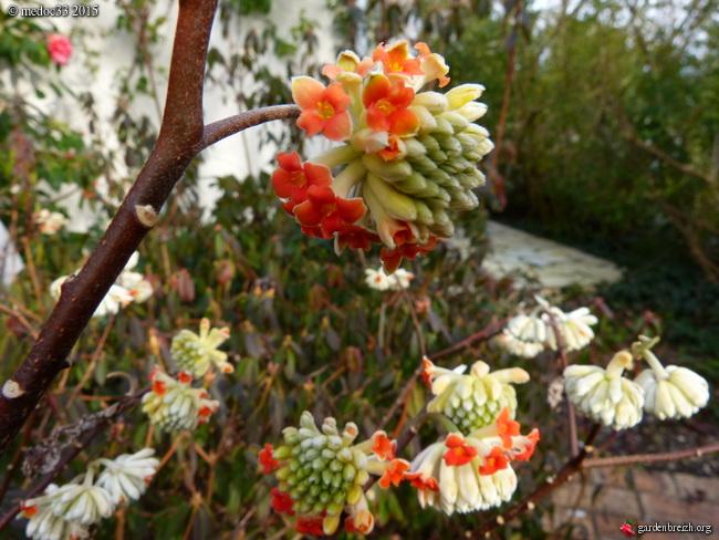 premiers sourires du jardin - Page 2 GBPIX_photo_658583