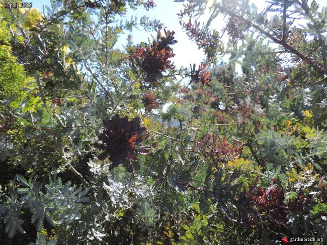 Les botanistes  - Page 6 GBPIX_photo_661291