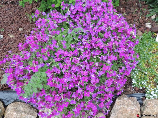 Les botanistes  - Page 5 GBPIX_photo_667427