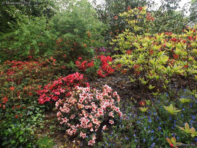 le joli mois de mai des fous jardiniers - Page 2 GBPIX_photo_667671