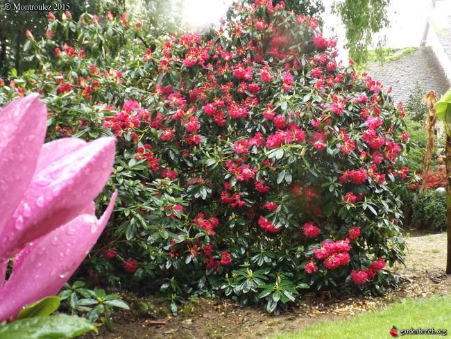 le joli mois de mai des fous jardiniers - Page 2 GBPIX_photo_667684