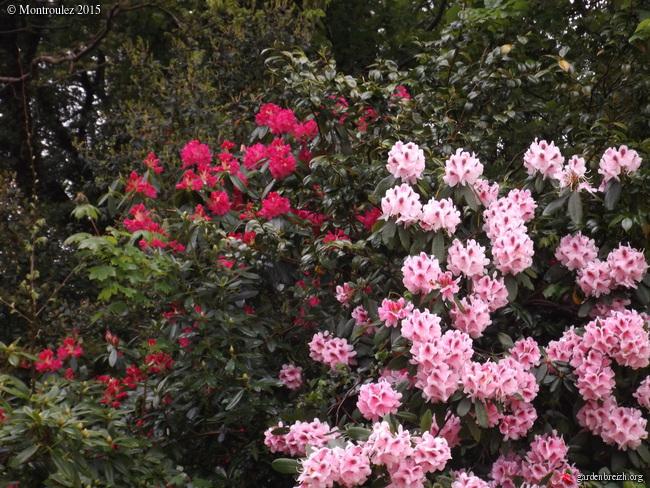 le joli mois de mai des fous jardiniers - Page 3 GBPIX_photo_667689