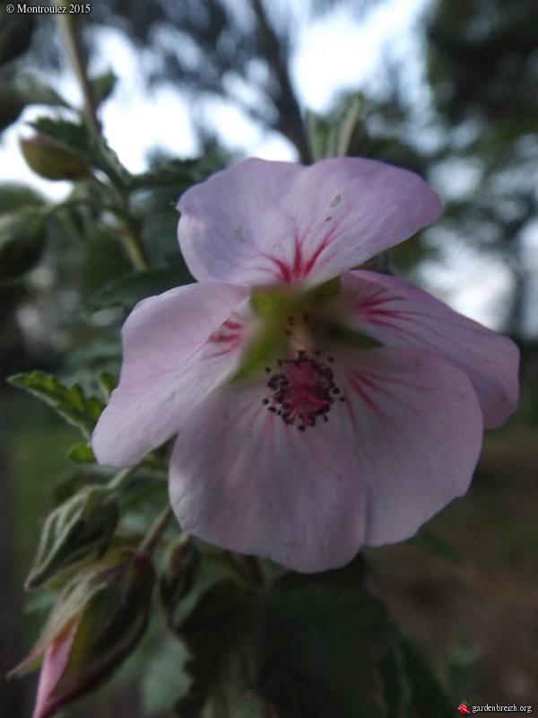 le joli mois de mai des fous jardiniers - Page 3 GBPIX_photo_667948