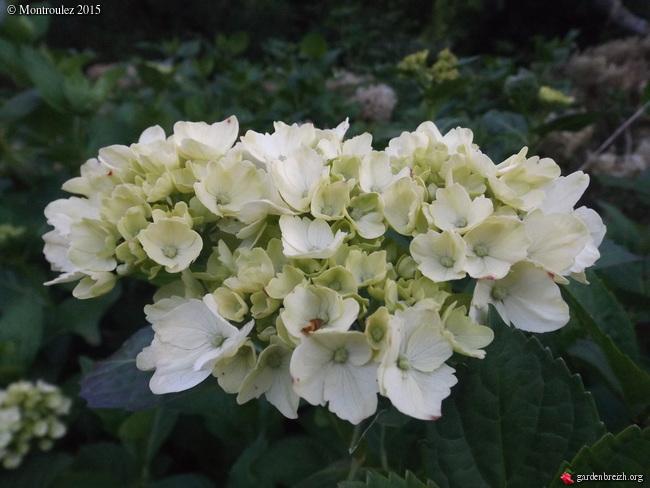 le joli mois de mai des fous jardiniers - Page 3 GBPIX_photo_667949