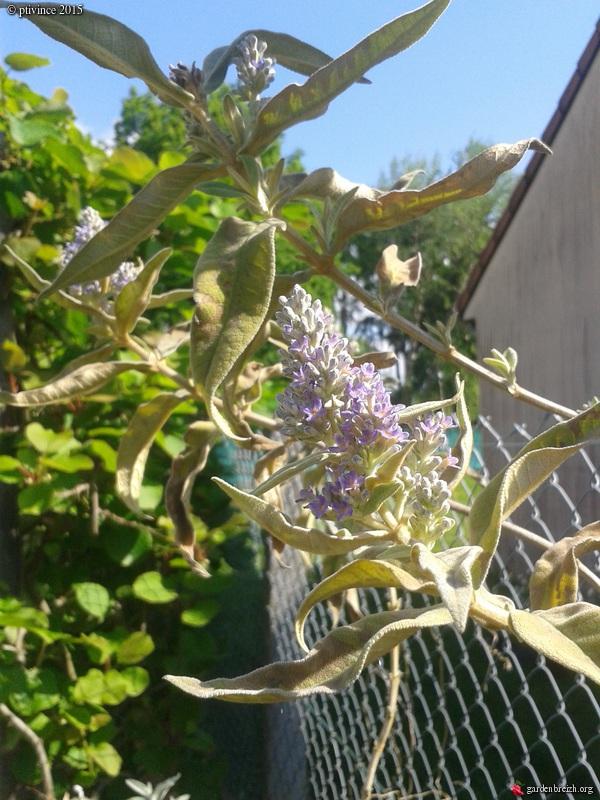 le joli mois de mai des fous jardiniers - Page 4 GBPIX_photo_668509