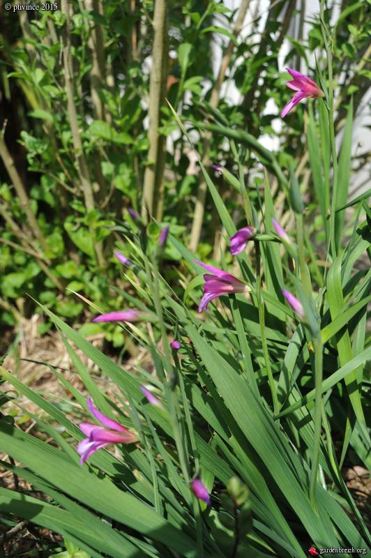 le joli mois de mai des fous jardiniers - Page 4 GBPIX_photo_668560