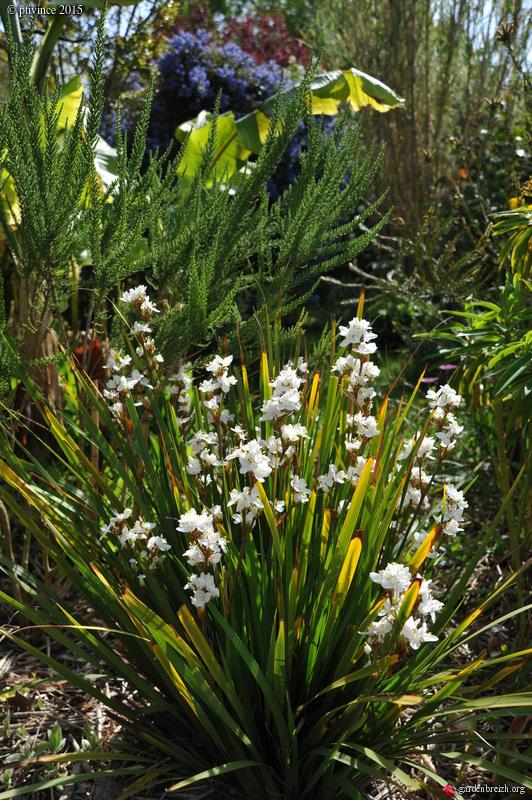 le joli mois de mai des fous jardiniers - Page 4 GBPIX_photo_668561