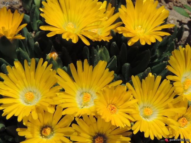 Air d'été au jardin - Page 2 GBPIX_photo_669265