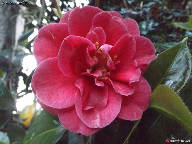 le joli mois de mai des fous jardiniers - Page 5 GBPIX_photo_669281