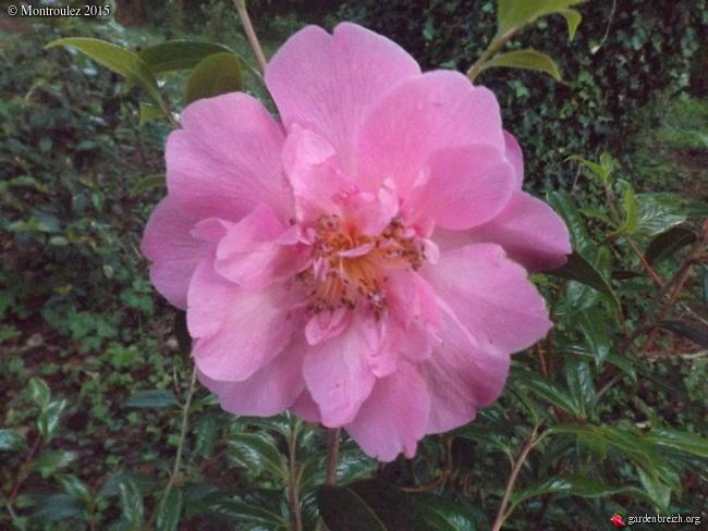le joli mois de mai des fous jardiniers - Page 5 GBPIX_photo_669282