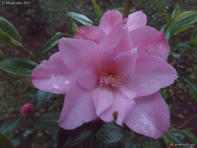 le joli mois de mai des fous jardiniers - Page 5 GBPIX_photo_669285