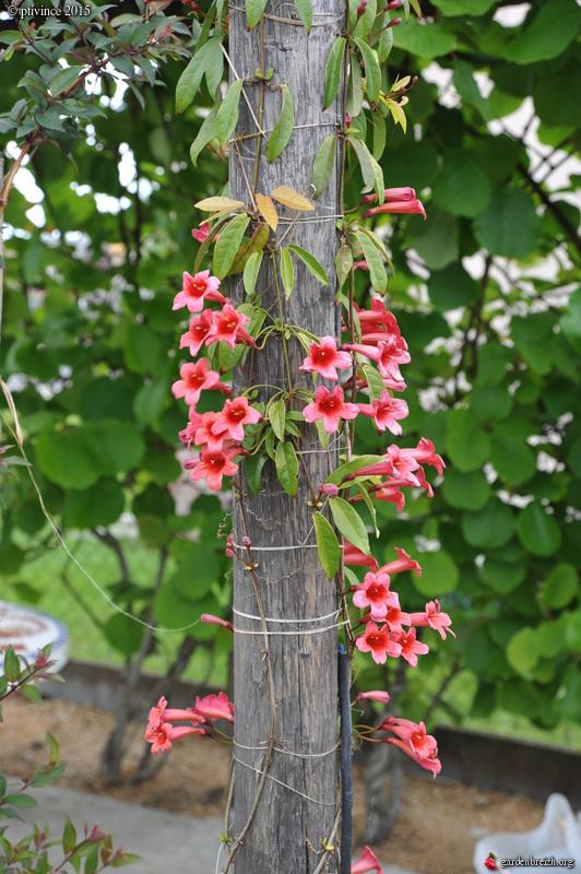 le joli mois de mai des fous jardiniers - Page 5 GBPIX_photo_669398