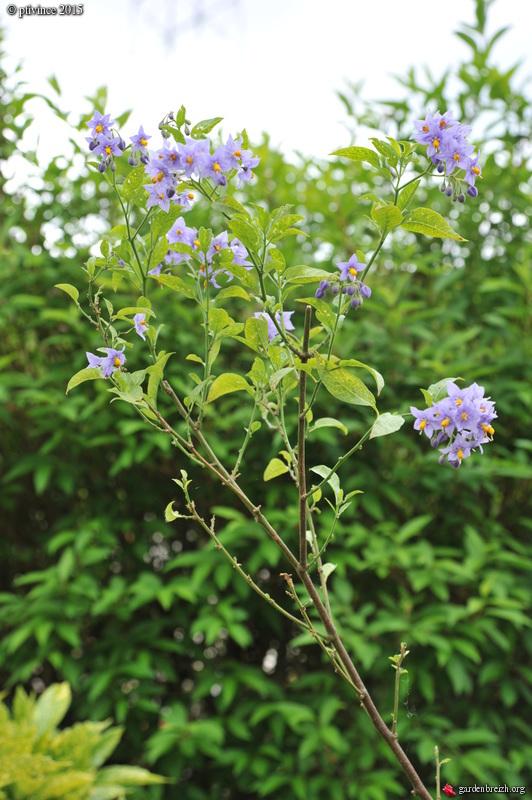 le joli mois de mai des fous jardiniers - Page 5 GBPIX_photo_669402