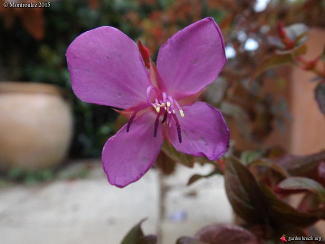 le joli mois de mai des fous jardiniers - Page 6 GBPIX_photo_669696