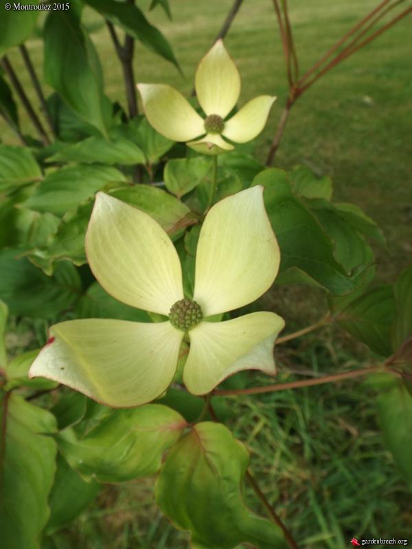 le joli mois de mai des fous jardiniers - Page 6 GBPIX_photo_669697