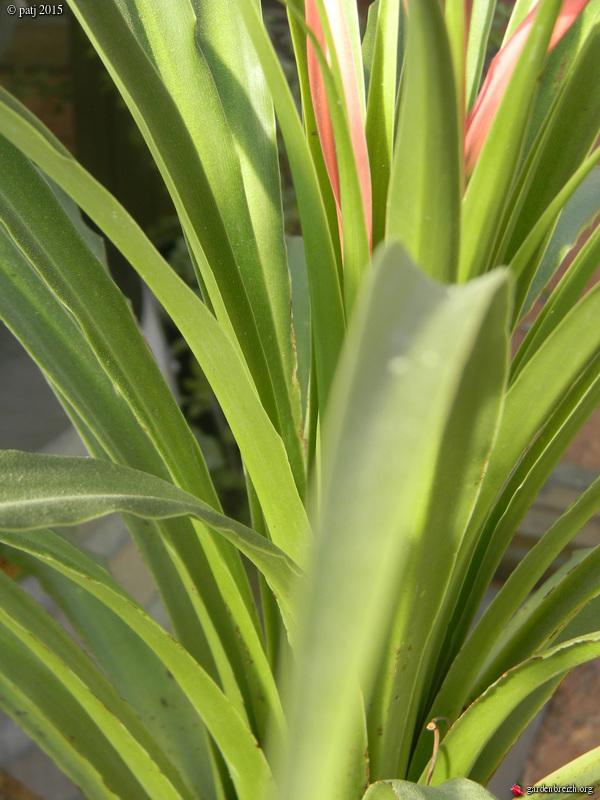 Les botanistes  - Page 7 GBPIX_photo_670254