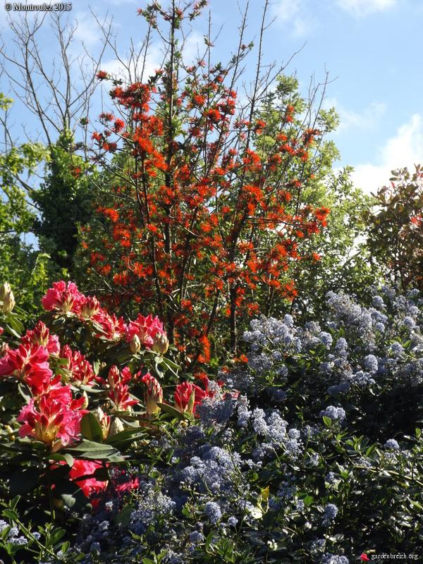 le joli mois de mai des fous jardiniers - Page 8 GBPIX_photo_670538