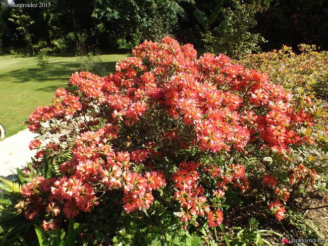 le joli mois de mai des fous jardiniers - Page 8 GBPIX_photo_670542