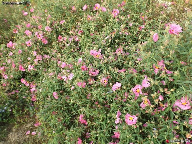 le joli mois de mai des fous jardiniers - Page 8 GBPIX_photo_670550