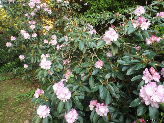 le joli mois de mai des fous jardiniers - Page 8 GBPIX_photo_670551