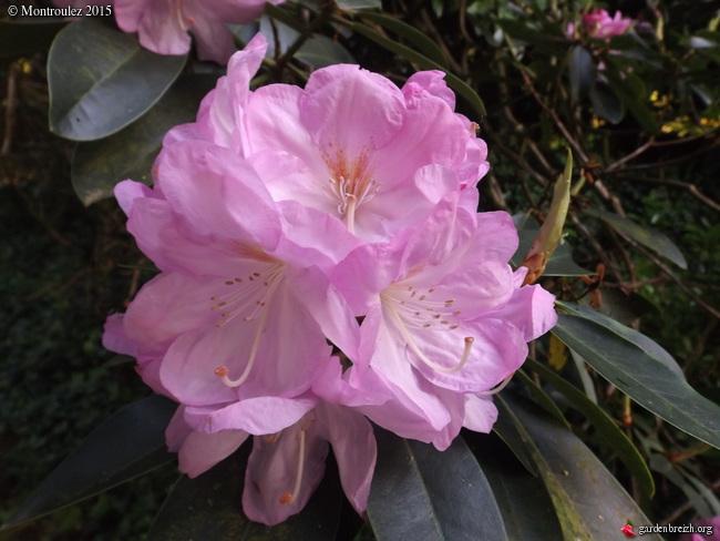 le joli mois de mai des fous jardiniers - Page 8 GBPIX_photo_670553