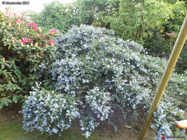 le joli mois de mai des fous jardiniers - Page 8 GBPIX_photo_670556