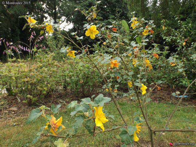 butinages du jour à l'ombre de nos plantes  - Page 2 GBPIX_photo_682554