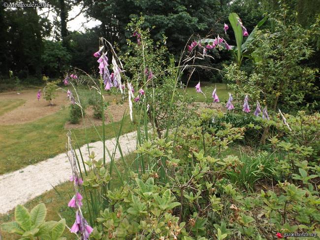 butinages du jour à l'ombre de nos plantes  - Page 2 GBPIX_photo_682555