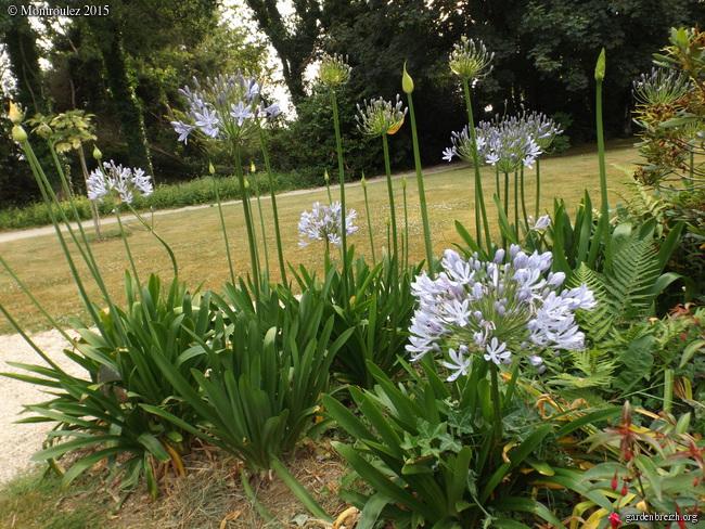 butinages du jour à l'ombre de nos plantes  - Page 2 GBPIX_photo_682557