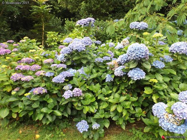 butinages du jour à l'ombre de nos plantes  - Page 2 GBPIX_photo_682561