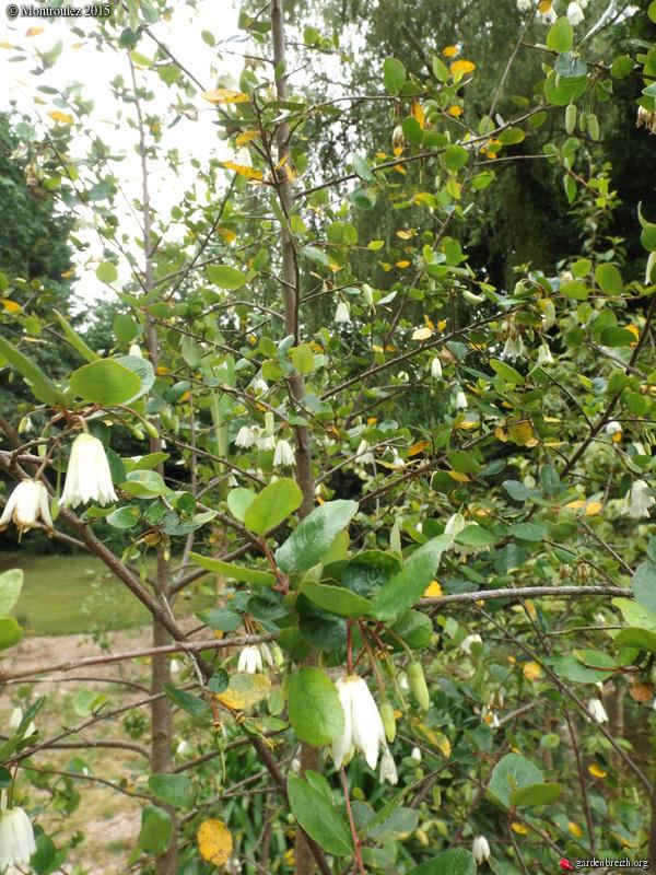 butinages du jour à l'ombre de nos plantes  - Page 2 GBPIX_photo_682569