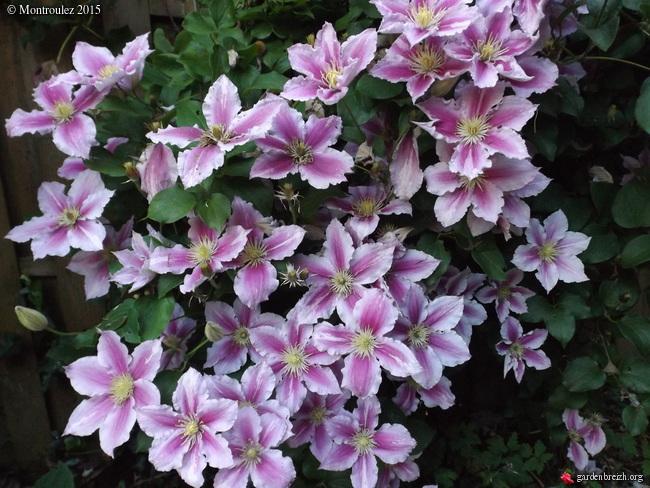 butinages du jour à l'ombre de nos plantes  - Page 2 GBPIX_photo_682601