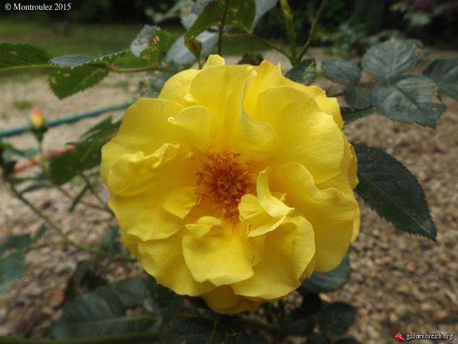 butinages du jour à l'ombre de nos plantes  - Page 2 GBPIX_photo_682602