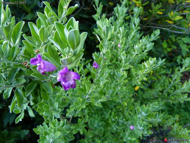 butinages du jour à l'ombre de nos plantes  - Page 3 GBPIX_photo_683785