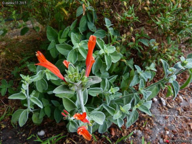 butinages du jour à l'ombre de nos plantes  - Page 3 GBPIX_photo_683788