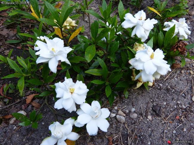 butinages du jour à l'ombre de nos plantes  - Page 3 GBPIX_photo_683796