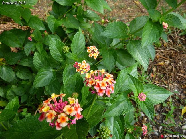 butinages du jour à l'ombre de nos plantes  - Page 3 GBPIX_photo_683799