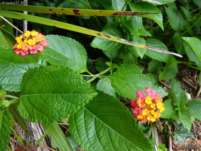 butinages du jour à l'ombre de nos plantes  - Page 3 GBPIX_photo_683802
