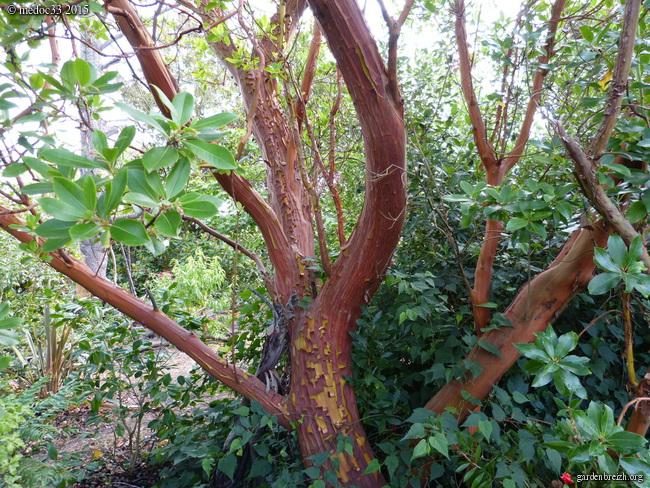 butinages du jour à l'ombre de nos plantes  - Page 3 GBPIX_photo_683809