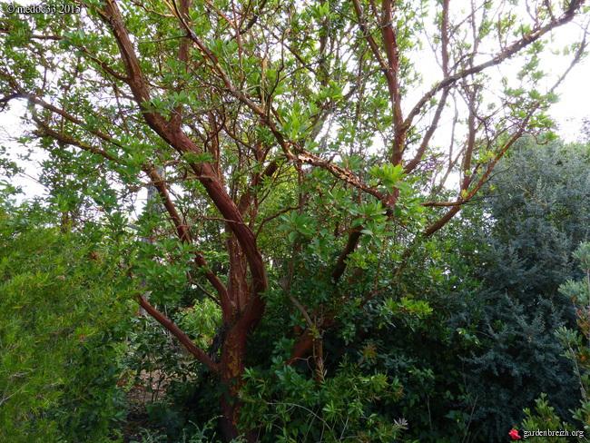 butinages du jour à l'ombre de nos plantes  - Page 3 GBPIX_photo_683816