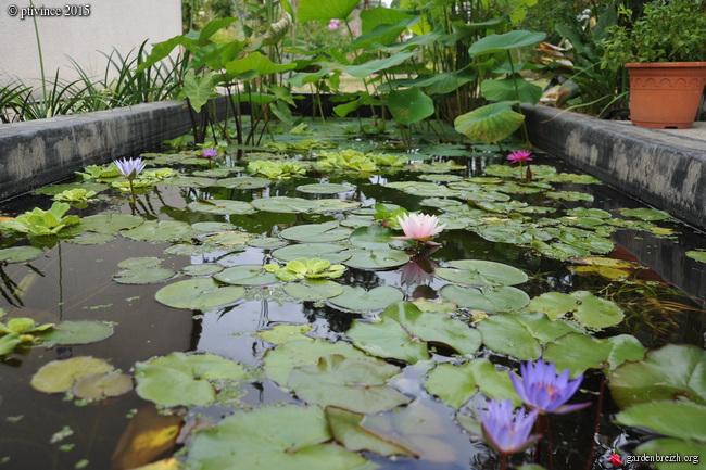 butinages du jour à l'ombre de nos plantes  - Page 4 GBPIX_photo_684321
