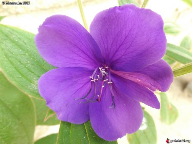 Floraisons du mois de juillet - Page 12 GBPIX_photo_685076