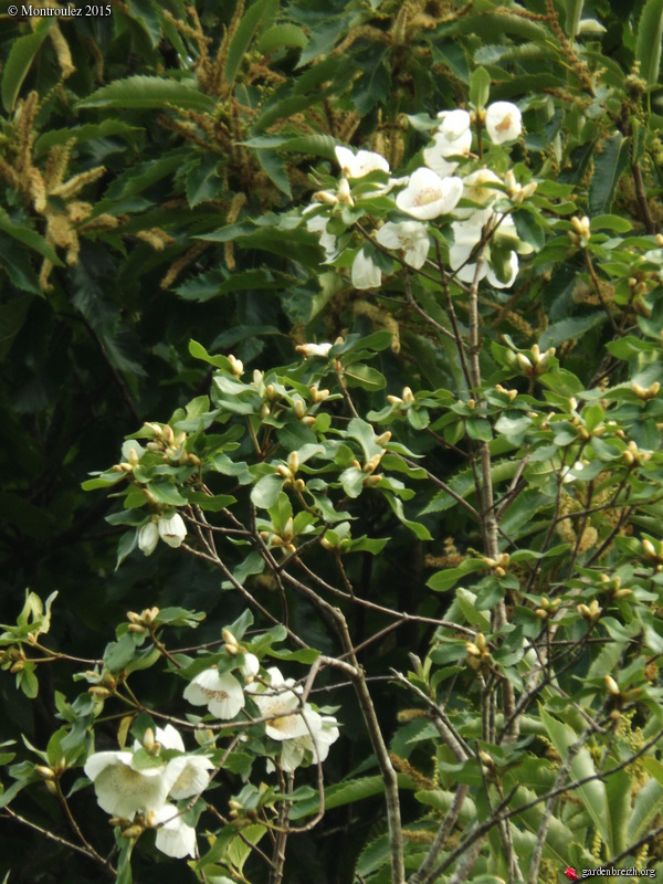 Floraisons du mois de juillet - Page 12 GBPIX_photo_685083