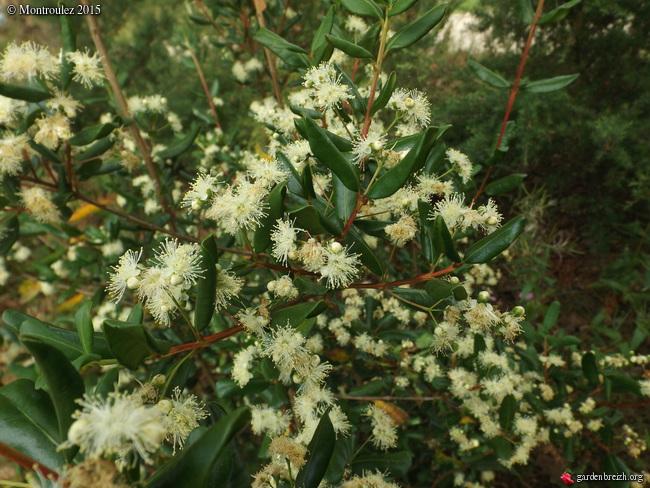 Floraisons du mois de juillet - Page 12 GBPIX_photo_685087